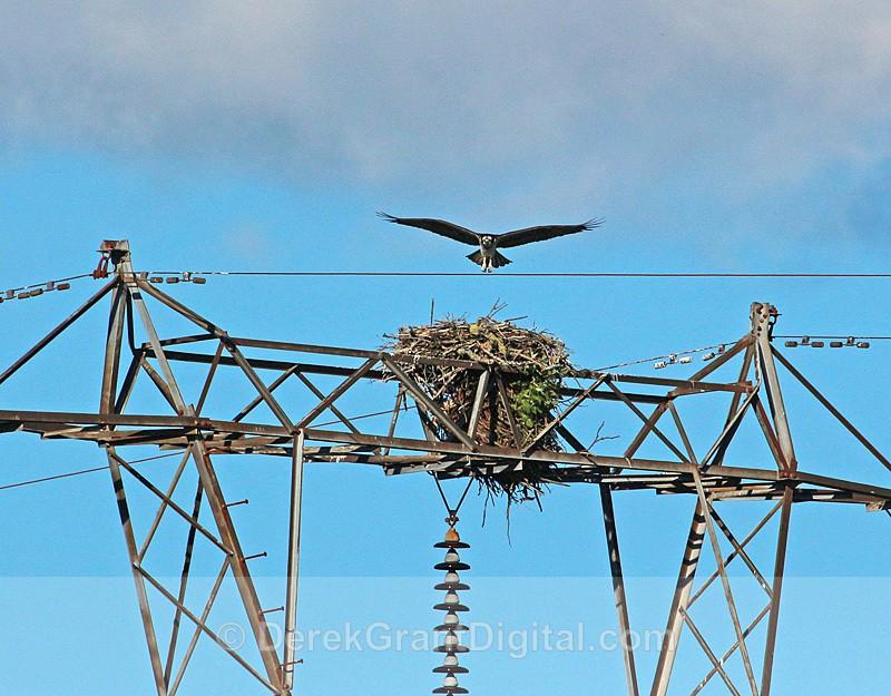 Final Approach! - Birds of Atlantic Canada