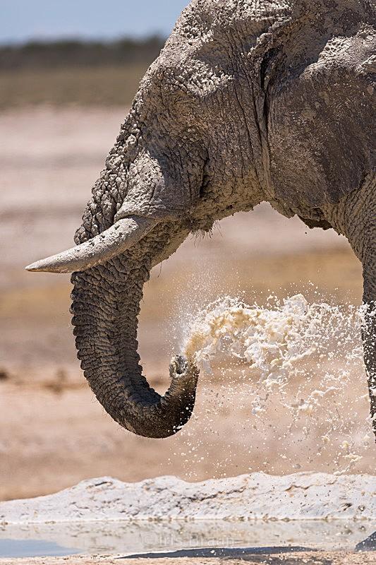 Precious water - Elephant
