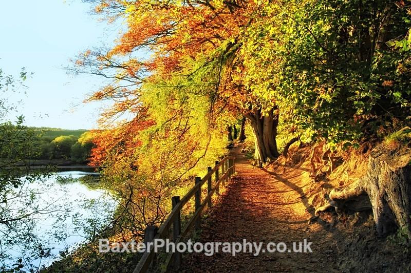 Autumn Around Swinsty - Views Around Harrogate: