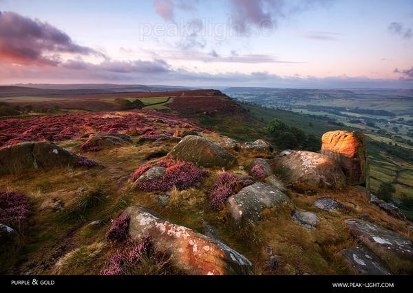 Purple & Gold - Peak District