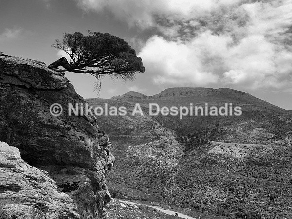 Α Lonely tree Ι Βιγλάτορας του Πεντελικού - Αττική Ι Attica