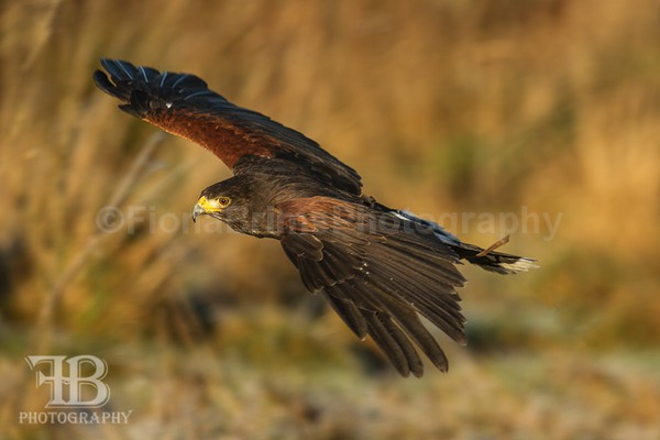wow-41 - Birds of Prey