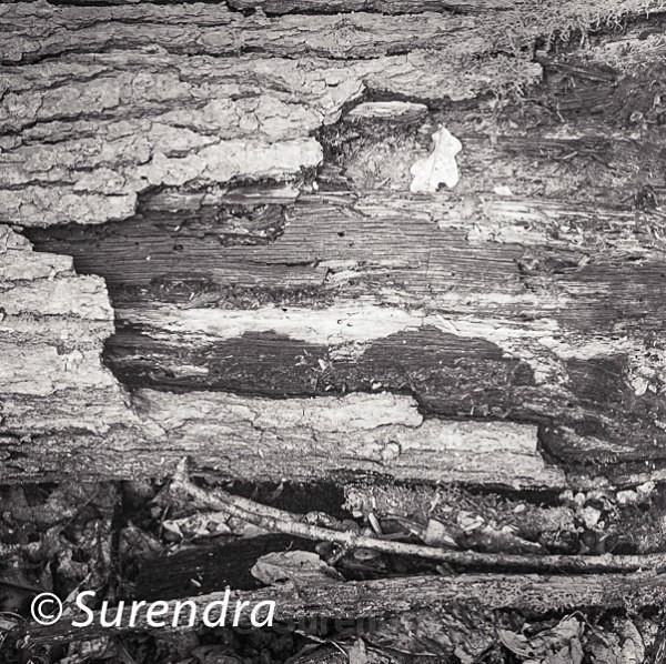Bark 28 - Bark 2