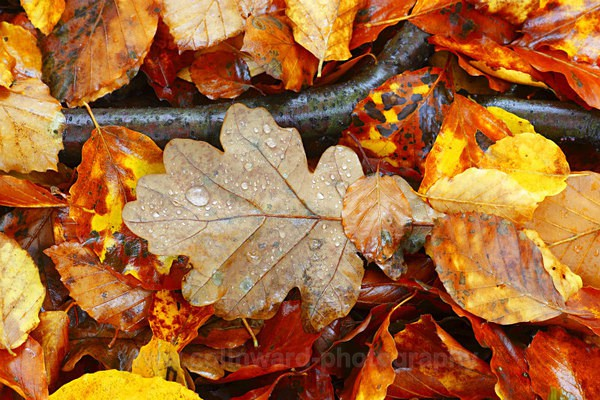 Autumn Leaves   ref 9355 - Close up images