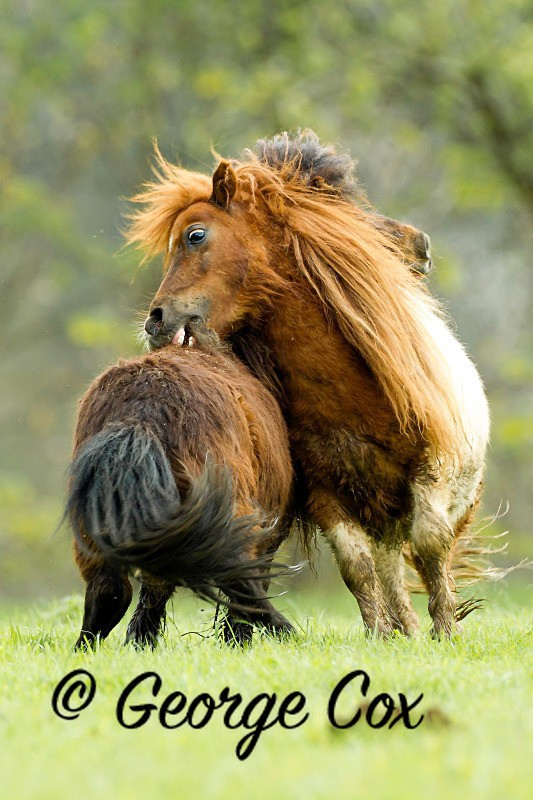Wild Horses - Mammals