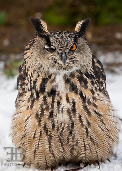 WoW jan-55 - Birds of Prey