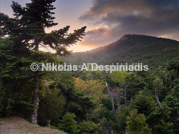Στο δάσος Ι In the woods - Αττική Ι Attica