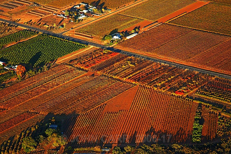 Autumn Vines from a Hot Air Balloon1-3853 - AERIAL PHOTOS