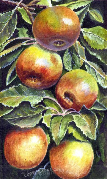 Apples - Original Work FOR SALE