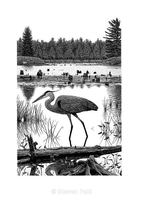 Great Blue Heron - Birds and Mammals