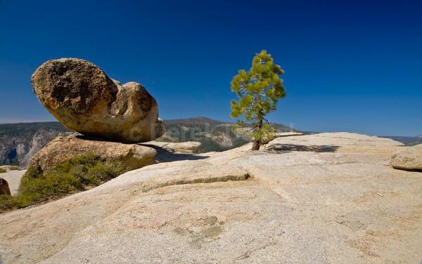 Rock & Tree - California