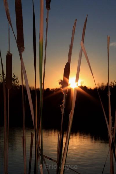 Cattail sunset - Marshall, Minnesota