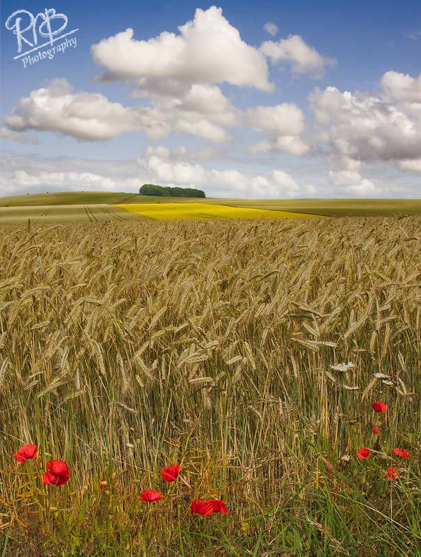 Wiltshire Summer - Wiltshire & West Country Landscapes