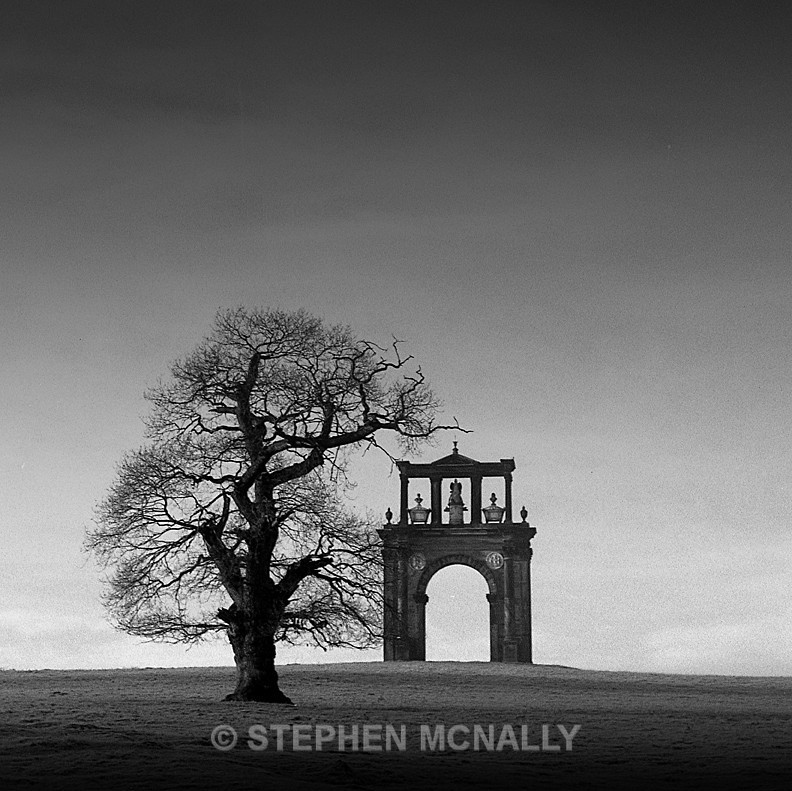 Triumph of a Tree - Images made on Film