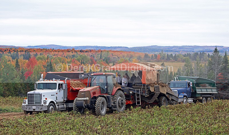 Potato Harvest Carleton County New Brunswick Autumn Festival - Autumn Festival