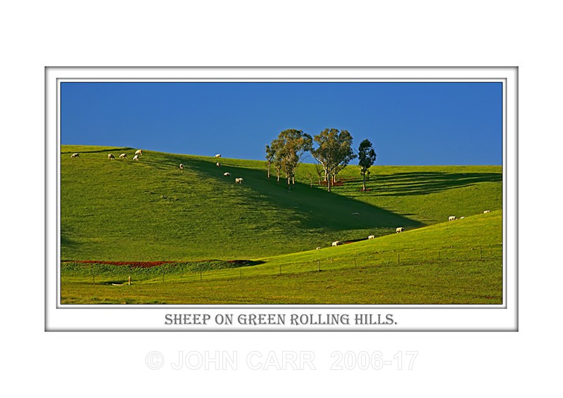 Beautiful Wall Art print  with a Border, showing Sheep Grazing on Green Rolling Hills, South Australia.