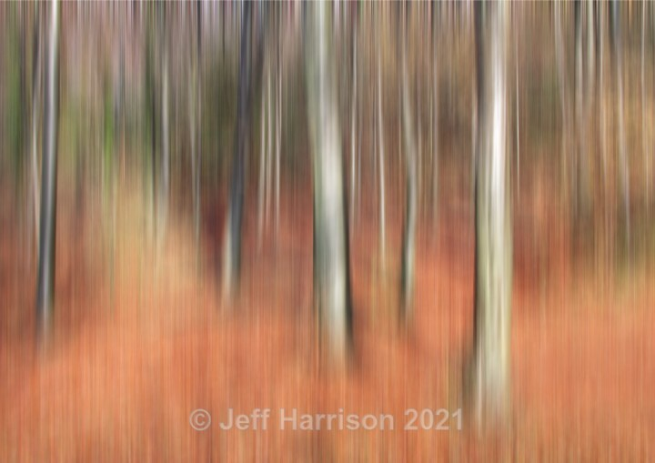 Beechwoods in Autumn (image Abstract 11) - Abstract