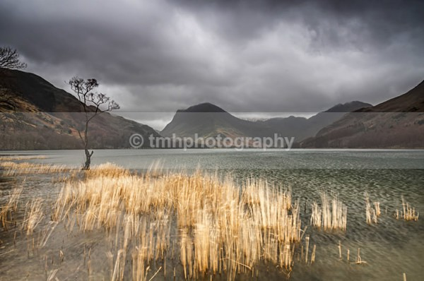Reeds on Buttermere. - Lakedistrict