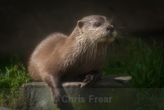 5 - Otters