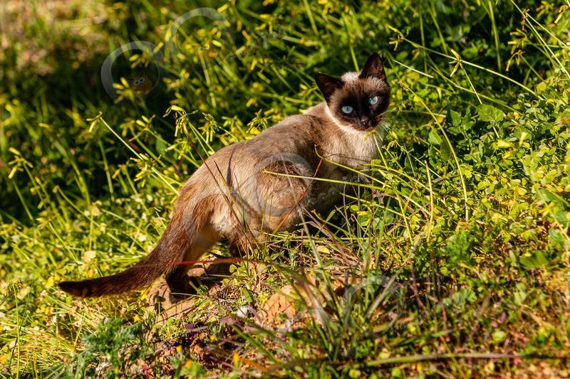 Cat domestic-1742 - Pet Photography
