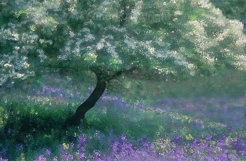 The Hawthorn Tree - Creative