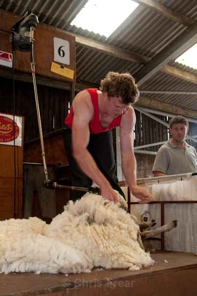 18 - Shearing Competition