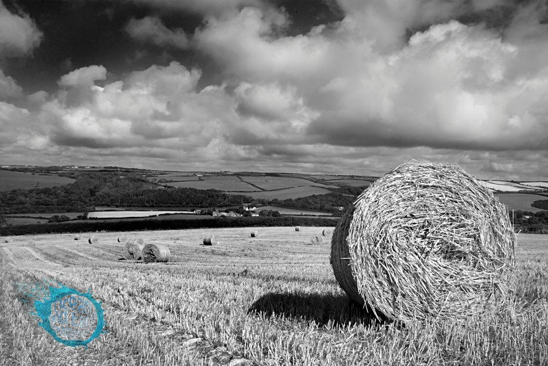 Rolling Hills B&W - Black and White