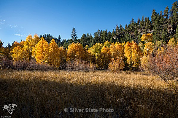 Hope Valley Fall Color - Nevada (mostly) Landscapes