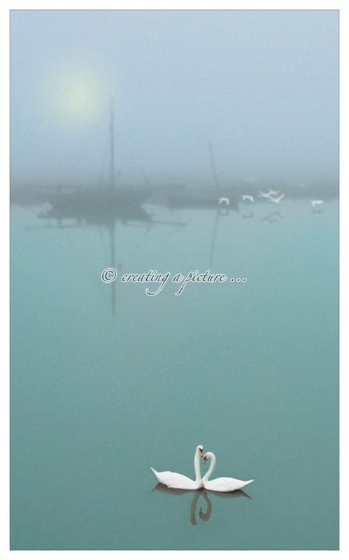 Love Birds - Creative