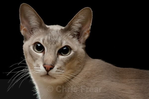 Frear-Cat04 - For T&C