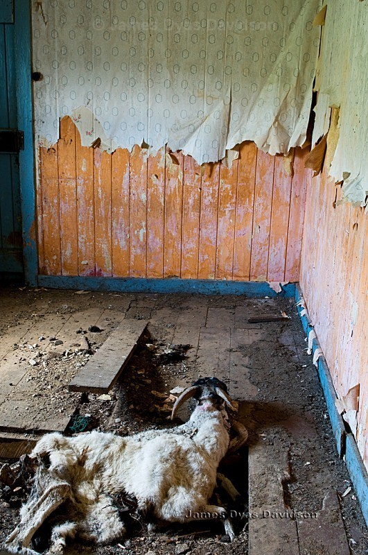 Evicted to make way for sheep. - Voices from the Glens