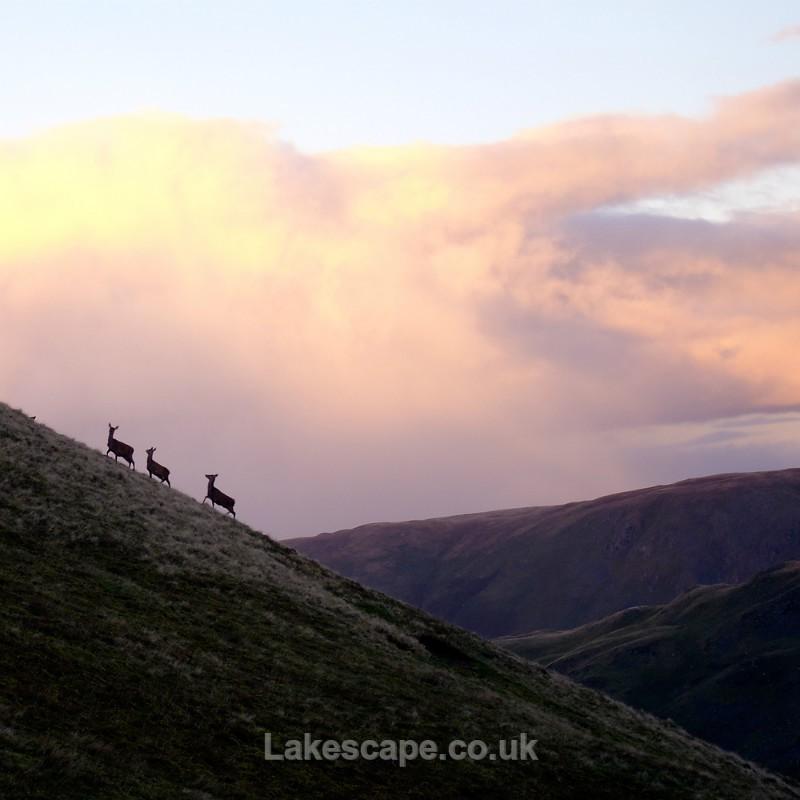An Evening Stroll_8234 - Animals & Birds