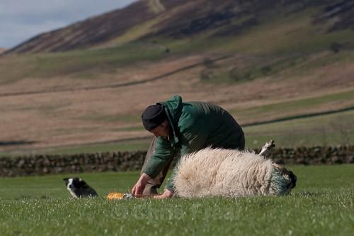 4 - The Lambing