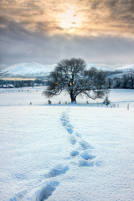 Footprints In The Snow - A photograph By Derek Smyth Photography