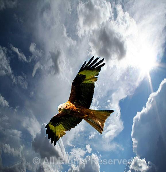 Wildlife1509 - Wildlife Wales