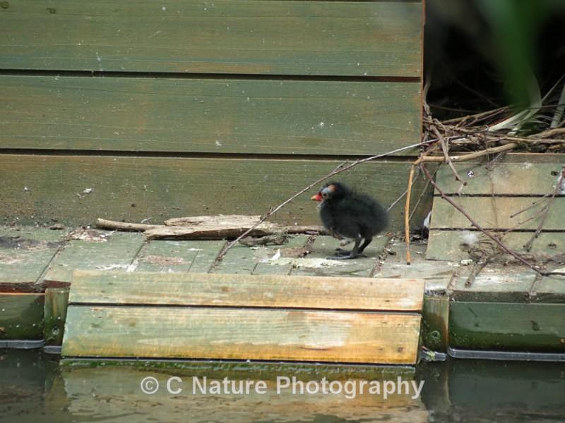 Baby Bird - Birds