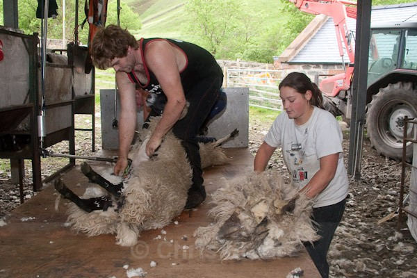 6 - Shearing at Glenwhargen Farm