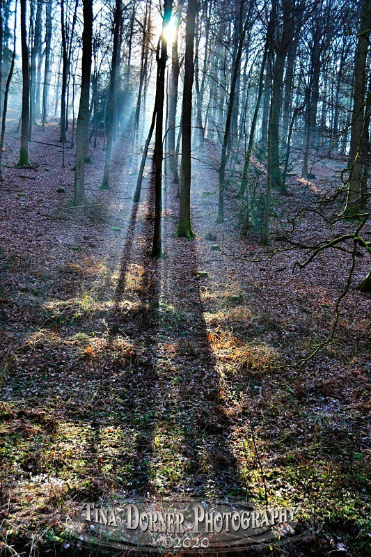Long Shadows, Soudley by Tina Dorner Photography, Forest of Dean and Wye Valley, Gloucestershire