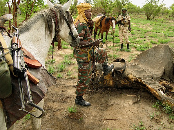 Poaching Elephants Chad