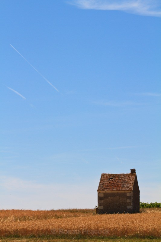 Cornfield - European Landscapes