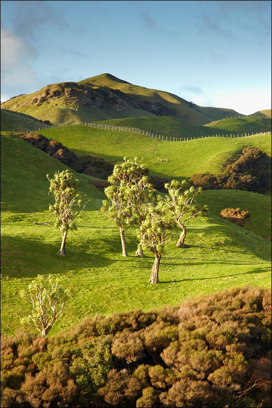 Golden Bay Trees - Photographs of New Zealand