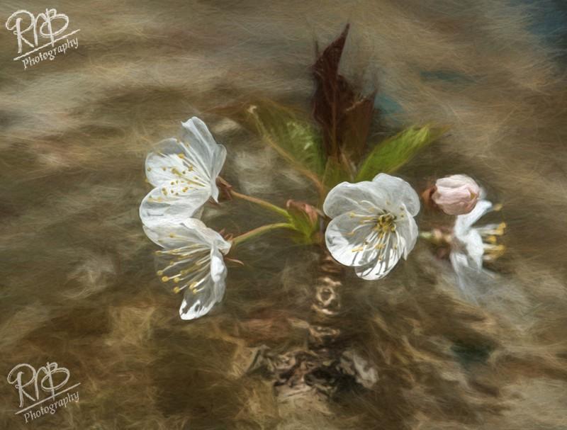- Digital Paintings