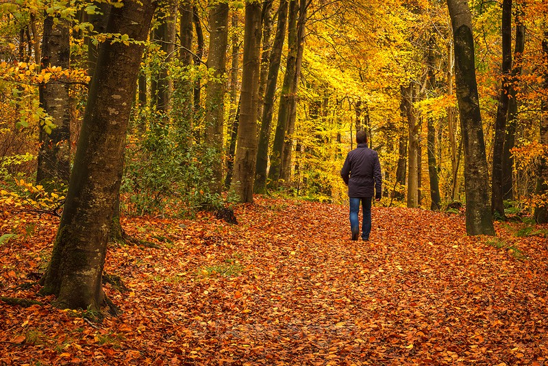 Autumn Walk - Co. Armagh