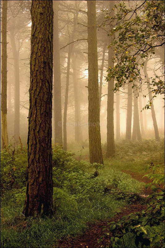 Woodland Mist - Photographs of Woodland & Rivers