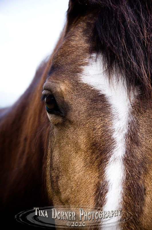 Ponys Face. from Animal Portraits Portfolio by Tina Dorner Photography