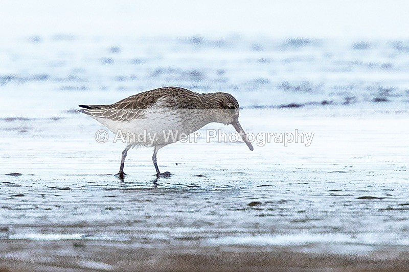 180307-Wirral0047 - Latest Photographs