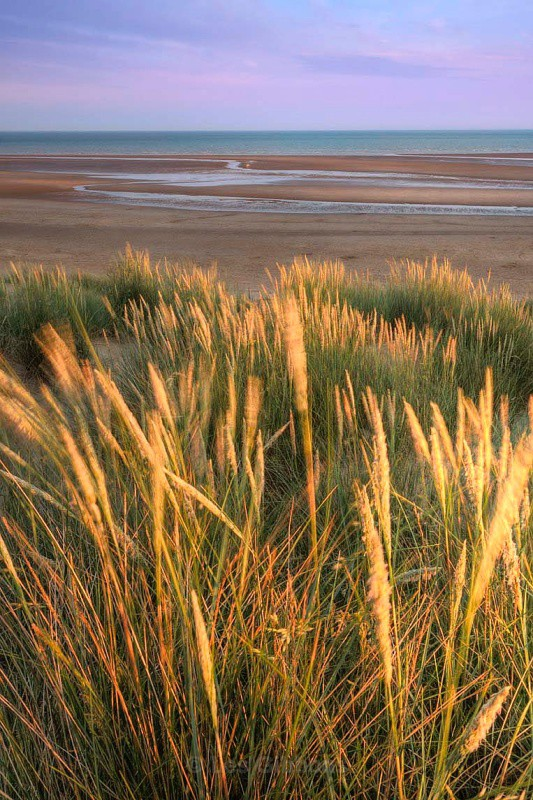 Camber sands - Grasses at sunset - Kent