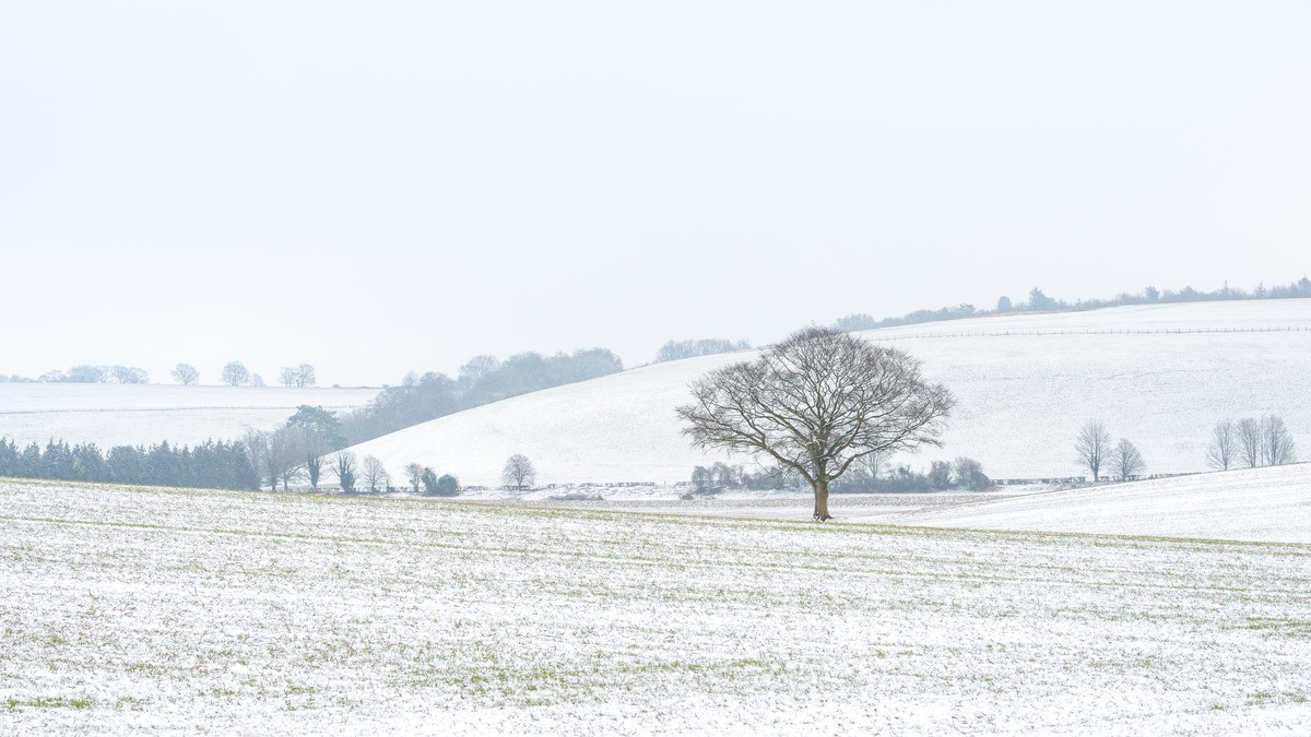 Flurry - South Downs - WINTER