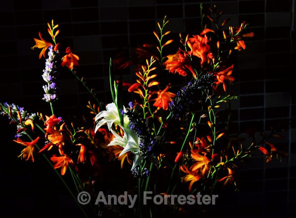 Crocosmia - Low Light Flowers