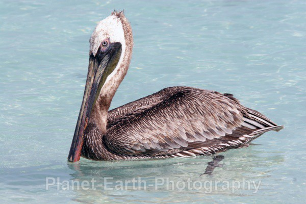 Pelican 2 - Cuba